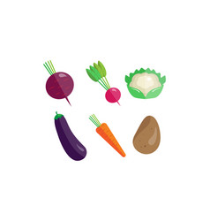 collection of vegetables beetroot radish vector image