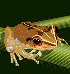 Coqui frog vector
