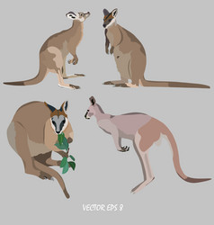 Four kangaroos - the gray kangaroo and the wallaby vector