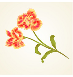 Lily alstroemeria stem flower and leaves closeup vector