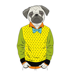 Pug with human body and colorful clothes vector