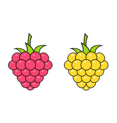 red and yellow raspberries on white background vector image