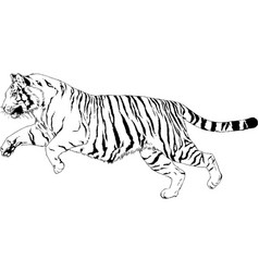 tiger drawn with ink from hands vector image
