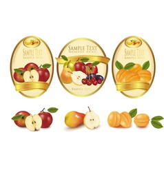 gold labels and fruits vector image vector image