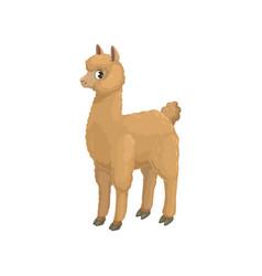 Llama alpaca isolated cartoon animal camel family vector