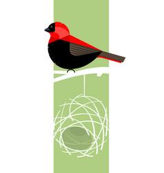 Red bishop bird vector