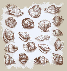 Seashells big set hand drawn vintage sketch vector