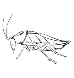 cockroach drawing on white background vector image