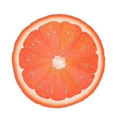 Grapefruit slice vector