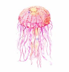 Jellyfish watercolor vector