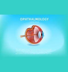 realistic human eye cross section close up view vector image