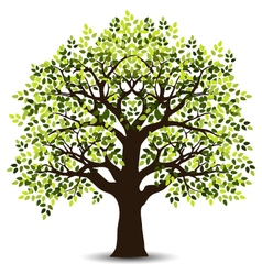 stylized tree for your design vector image vector image