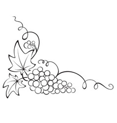 Design element - Grapevine vector image vector image