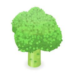 broccoli icon isometric style vector image