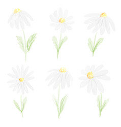 watercolor white daisy collection on white vector image