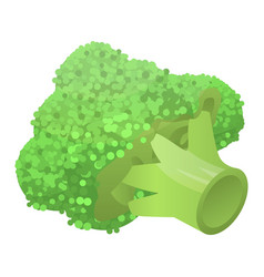 Fresh broccoli icon isometric style vector