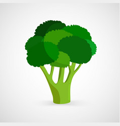 Fresh green piece of broccoli vector