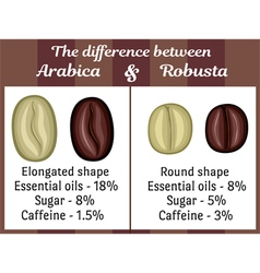 The difference between Arabica and Robusta vector