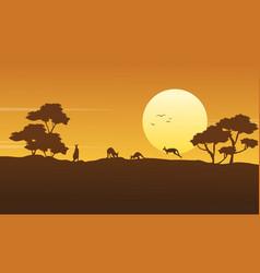 scenery kangaroo beauty collection stock vector image
