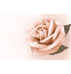 Vintage background with beautiful pink rose vector image vector image