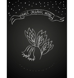 Chalk flower on blackboard vector image