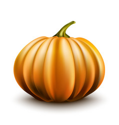 pumpkin isolated on white background eps10 vector image