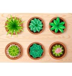 Top View Plant Icon Set vector