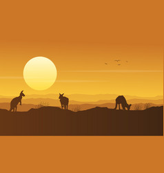 kangaroo on the hill beauty scenery silhouette vector image vector image