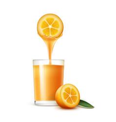 kumquat juice vector image
