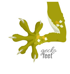 Gecko feet reptile lizard animal foot vector