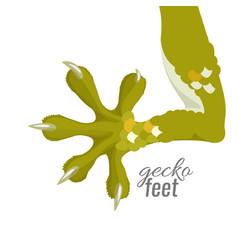 gecko feet reptile lizard animal foot vector image
