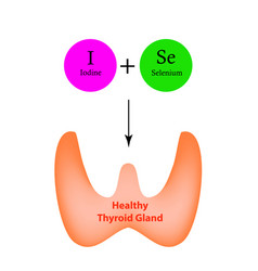 Selenium iodine normal functioning thyroid gland vector