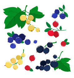 set cartoon cranberries and blueberries vector image