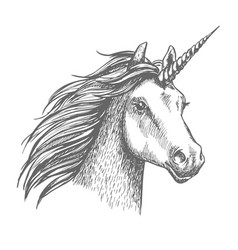 Unicorn sketch isolated head vector