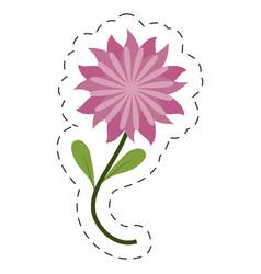 flower aster decoration image cut line vector image