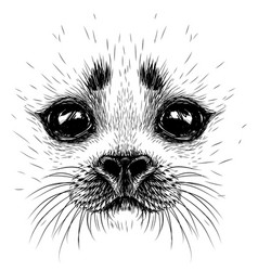 A baby seal graphic portrait of baby seal vector