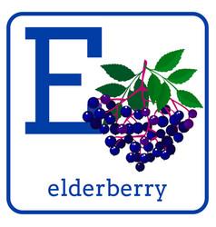 An alphabet with cute fruits letter e elderberry vector