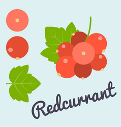 Bunch of redcurrant vector