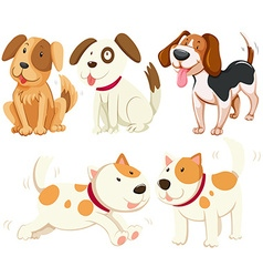 Different kind of puppy dogs vector image