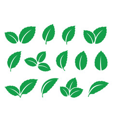 Green set mint leaves twig sprig silhouettes vector