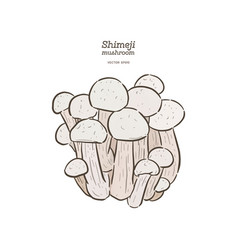 hand drawing a gourmet mushroom shimeji vector image