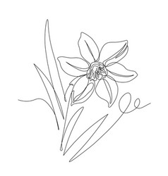 Narcissus flower with leaves symbol spring vector