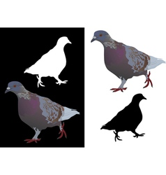 pigeon vector image vector image