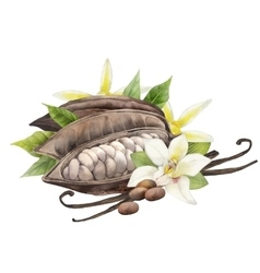 Watercolor cocoa fruit and vanilla flowers vector image