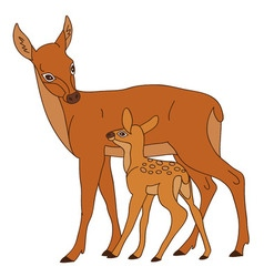 Deer with baby vector
