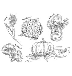 organic food sketches hand drawn vegetables vector image