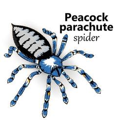 Peacock parachut spider vector