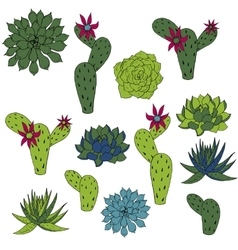 set of cactus and succulents vector image vector image