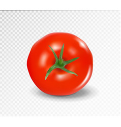 tomato top side realistic red tomato vector image
