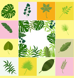 tropical leaves palm summer exotic jungle green vector image
